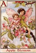 Flower Fairies Barker