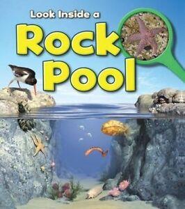 A Rock Pool, Louise Spilsbury
