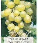 Grape Fruit Plants