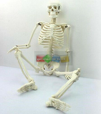 45cm Human Anatomical Anatomy Skeleton Medical Model Stand Fexible Hot Sale