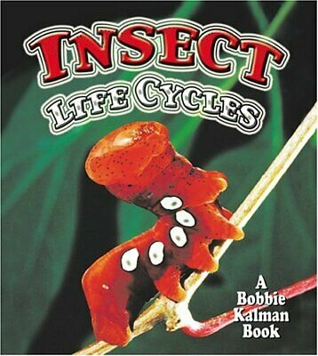 Insect Life Cycles  The World of Insects  Insect Life Cycles