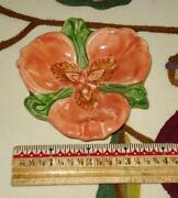 Franciscan Wildflower