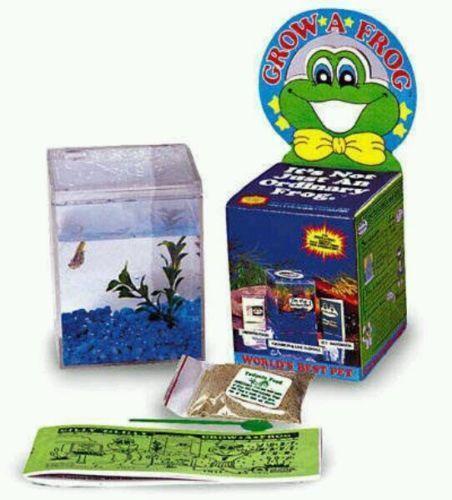 Live Frogs | eBay