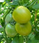 Grape Fruit Plant Seeds