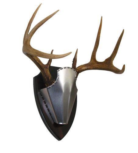 European Antler Mount: Taxidermy