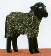 Miniature Sheep