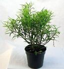 Bamboo Plant Pot