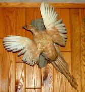 Pheasant Mount