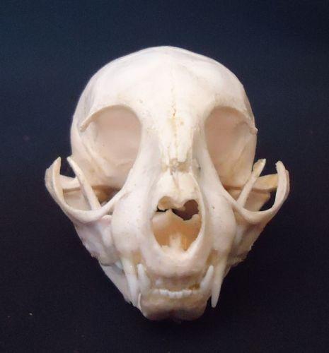 Animal Skulls | eBay