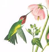 Large Audubon Print