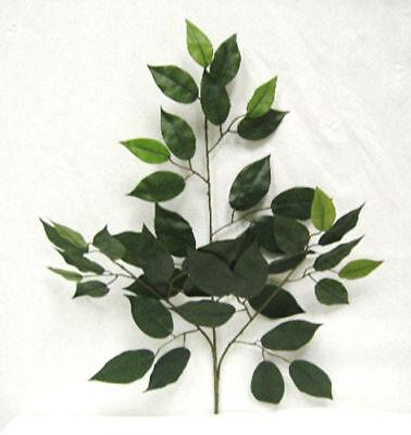 12 Ficus Sprays Green 24