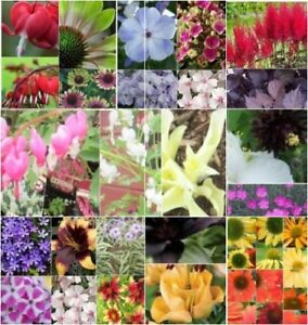 PLANTS for Sale - Perennials & Much More  - $ 1.00 & up