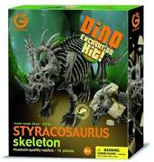 Dino Skelett