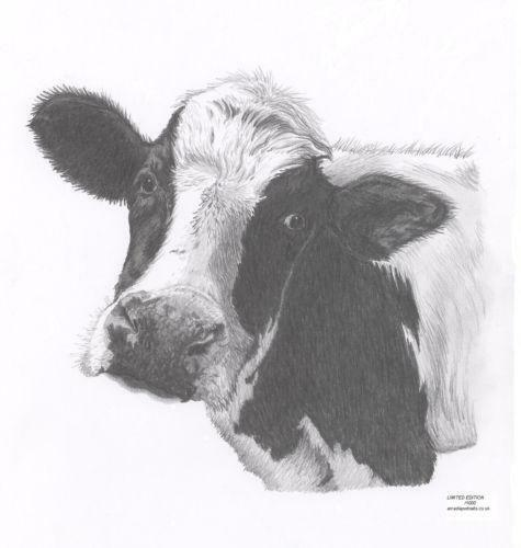 Cow Picture Art Ebay