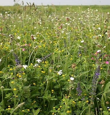 PREMIUM ANNUAL AND PERENNIAL WILDFLOWER & GRASS SEEDS MEADOW MIX 1KG