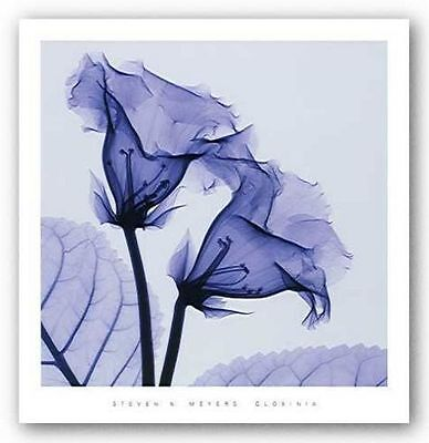 PHOTO FLORAL ART PRINT Gloxinia by Steven Meyers