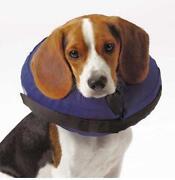 Dog Medical Collar