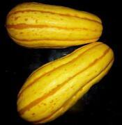 Sweet Potato Seeds