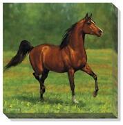 Arabian Horse Art Ebay