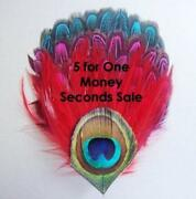 Peacock Feathers Sale