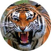 Tiger Car Stickers