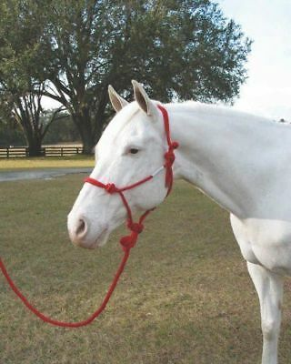 Braided 440769 Hamilton Halter Co. 440769 Adult Horse Rope Halter w/ Lead Red -