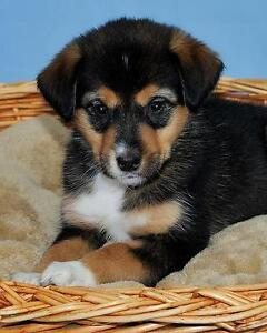 """Baby Female Dog - Terrier: """"Lacie"""""""