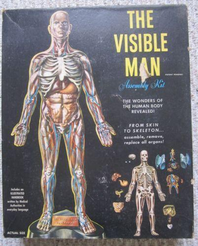 Visible Man: Toys & Hobbies | eBay