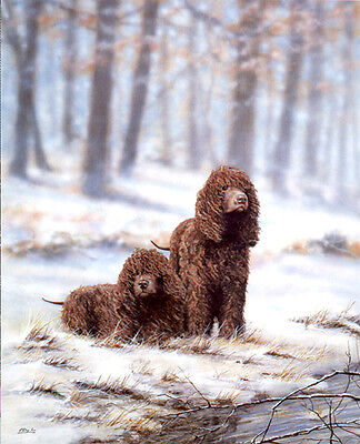 IRISH WATER SPANIEL DOG FINE ART LIMITED EDITION PRINT  Snow Bound by Paul Doyle