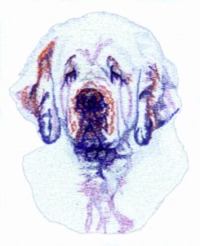 Embroidered Ladies Short-Sleeved T-Shirt - Clumber Spaniel BT3516
