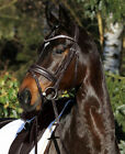 Passier English Horse Bridles