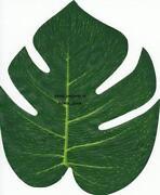 Silk Palm Leaves