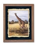Giraffe Pictures