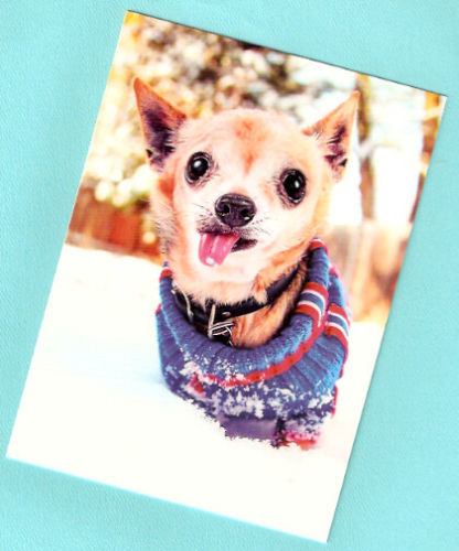 Chihuahua Sweater Snowflake Christmas Cards Box of 12