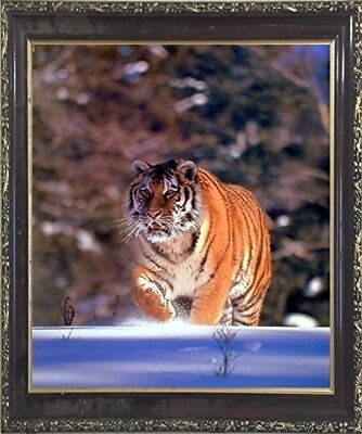 Siberian Tiger (Walking in Snow) Snare Animal Wall Decor Art Framed Picture