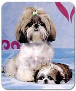 Shih Tzu Collectibles