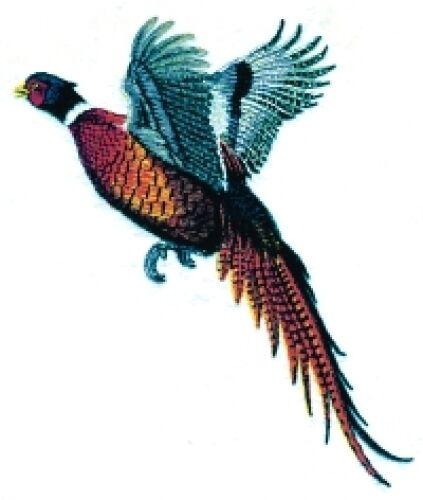 Embroidered Sweatshirt - Pheasant BT2856