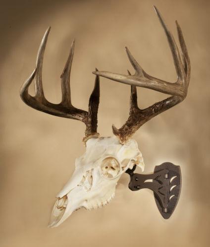 Deer Skull: Taxidermy | eBay