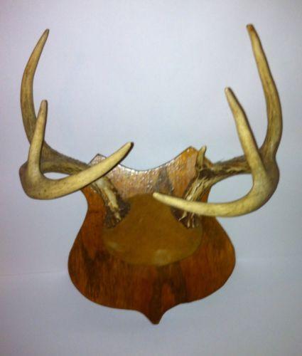 Deer Antlers Taxidermy Ebay