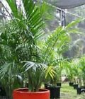 Plant Large (Floor) Partial Shade House Plants