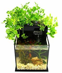 Grow herbs in you kitchen with Fish!