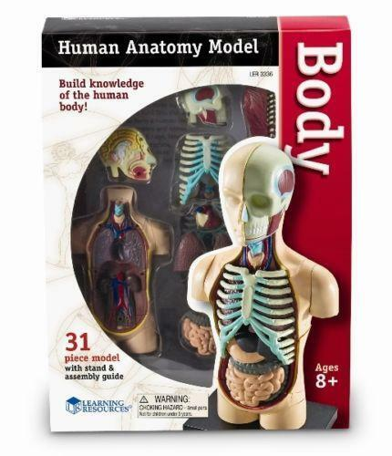 Human Body Model Ebay
