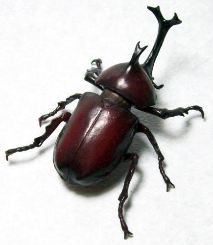 rhinoceros beetle ebay