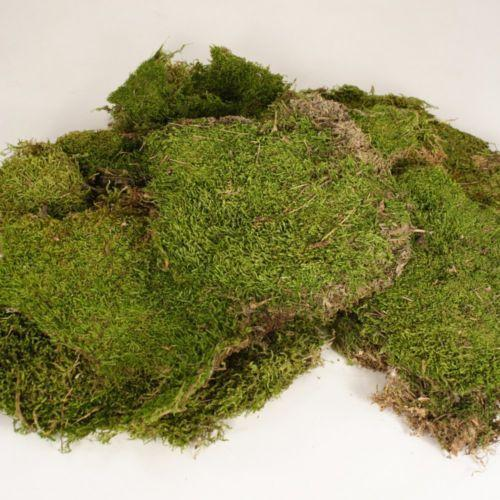 Dried Moss Ebay