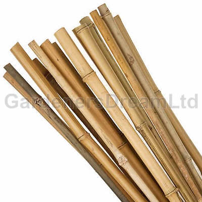 100 X 6FT HEAVY DUTY BAMBOO GARDEN CANES STRONG THICK QUALITY PLANT SUPPORT