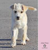 """Young Female Dog - Terrier: """"Penny"""""""