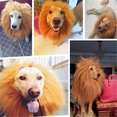 US SHIP! Pet For Medium/Large Dog Hat Costume Lion Mane Wig Halloween Dress Up](Medium Dog Costumes For Halloween)