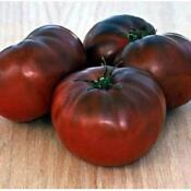 Heirloom Tomato Seeds Brandywine