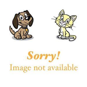 Found Female Cat - Black Shorthair
