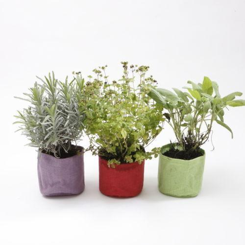 Kitchen Window Herb Planter: Herb Pots
